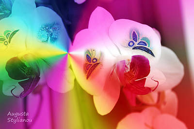 Colourful Orchids And Butterfies Poster by Augusta Stylianou