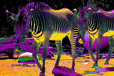 Colourful Zebras  Poster by Aidan Moran
