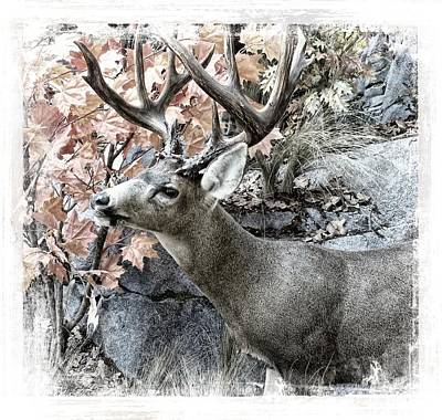 Nature Poster featuring the photograph Columbia Blacktail Deer by Aaron Berg