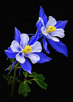 Poster featuring the photograph Columbine Duet by Priscilla Burgers