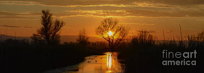 Colusa Wildlife Refuge Sunset Poster