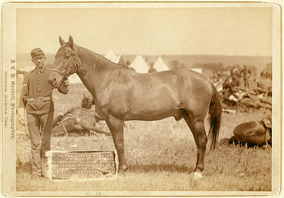 Comanche, The Only Survivor Of The Custer Massacre Poster