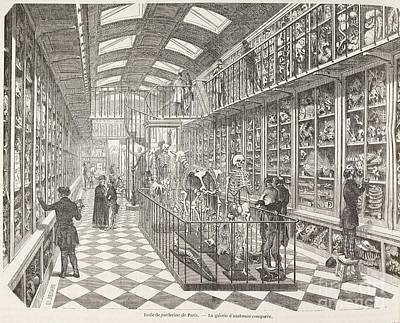 Comparative Anatomy Gallery, 1850s Poster by British Library