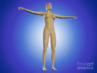 Conceptual Image Of Female Nervous Poster