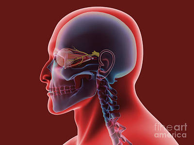 Conceptual Image Of Human Eye And Skull Poster by Stocktrek Images