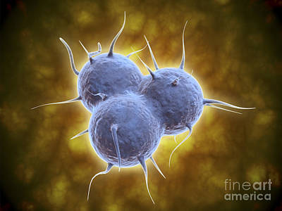 Conceptual Image Of Rna Virus Poster by Stocktrek Images
