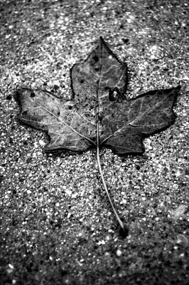 Concrete Leaf Poster