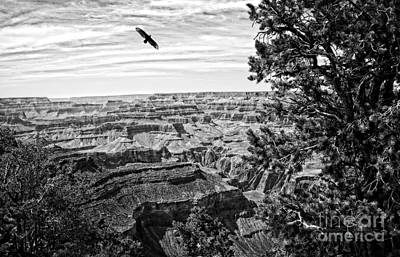 Condor Over The Grand Canyon In Black And White Poster by Lee Craig