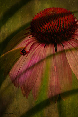 Cone Flower And The Ladybug Poster by Lesa Fine