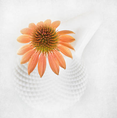 Coneflower And Milkglass Poster by David and Carol Kelly