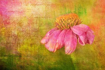 Coneflower Echinacea Poster by Robert Jensen