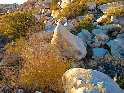 Cooper's Goldenbush In The Rocks Near Barker Dam In Joshua Tree Np-ca Poster by Ruth Hager