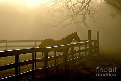 Coosaw Early Morning Mist Poster