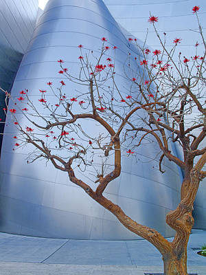 Coral Tree And Steel Poster by Robert Jensen