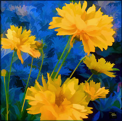 Coreopsis - Yellow And Blue Poster