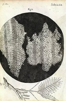 Cork Cells Poster