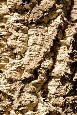 Cork Oak Bark (quercus Suber) Poster