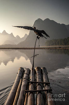 Cormorant Fishing On Li River Poster