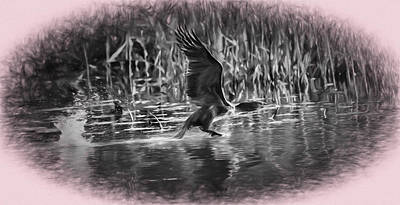 Cormorant Imp Oct 2014- Flying Cormorant Poster by Leif Sohlman