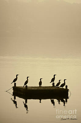 Cormorants And Dock Taunton River No. 2 Poster by David Gordon