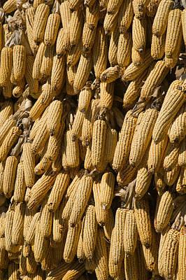 Corn Cobs Hanging To Dry, Baisha Poster