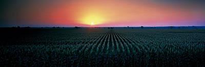 Corn Field At Sunrise Sacramento Co Ca Poster