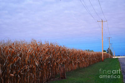 Cornfield In Autumn Poster by Luther   Fine Art