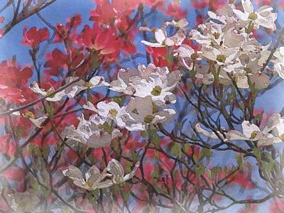 Cornus Florida In Bloom Poster by Philip White