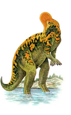 Corythosaurus Dinosaur Poster