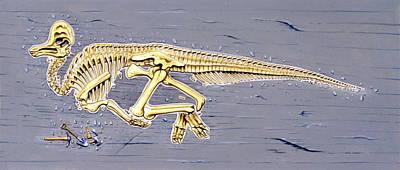 Corythosaurus Dinosaur Skeleton Poster