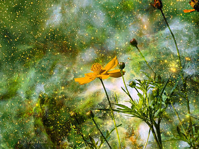 Cosmos Sharing It's Beauty Poster by J Larry Walker