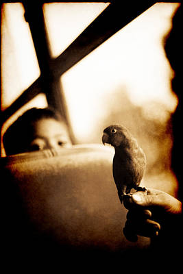 Costa Rican Bird Boy Poster