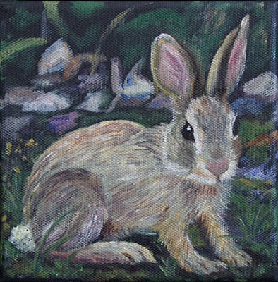 Cottontail Poster