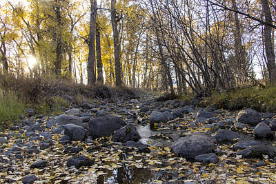 Cottonwood Creek Near Deer Lodge Montana Poster