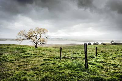 Cottonwood In Spring Storm Poster by Alexander Kunz
