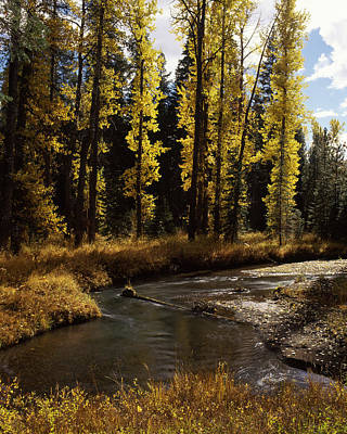 Cottonwood Trees Along Annie Creek Poster by Panoramic Images