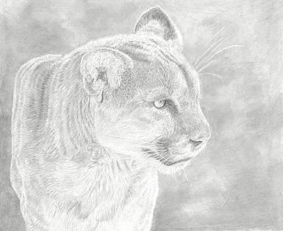 Cougars Gaze Poster