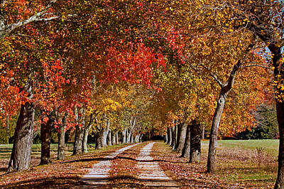 Poster featuring the photograph Country Lane In Autumn by Jerry Gammon