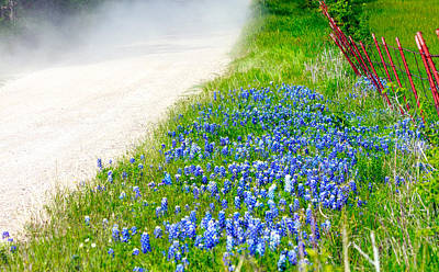 Country Road Bluebonnet Patch Poster by Lorri Crossno