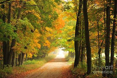 Poster featuring the photograph Country Road In Autumn by Terri Gostola