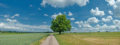 Country Road Passing Through A Field Poster by Panoramic Images