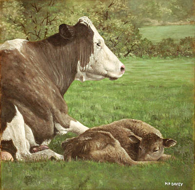 Cow And Calf In Field Poster by Martin Davey