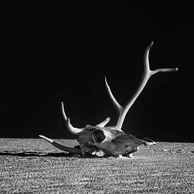 Cow Skull And Antlers Poster