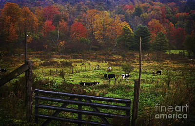 Poster featuring the photograph Cow Pasture In Autumn by Debra Fedchin