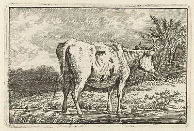 Cow Standing In A Puddle, Print Maker Anthony Oberman Poster