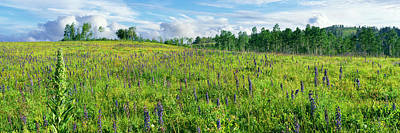Cowparsnip And Larkspur Wildflowers Poster by Panoramic Images