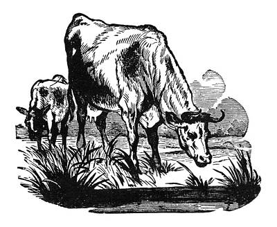 Cows, 19th Century Poster by Granger