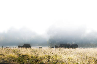 Cows In A Foggy Field Poster by Bill Cannon
