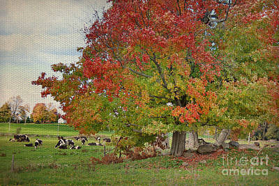 Cows In Autumn Poster