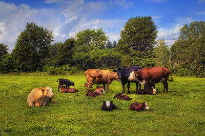 Cows Out To Pasture Poster by Joann Vitali